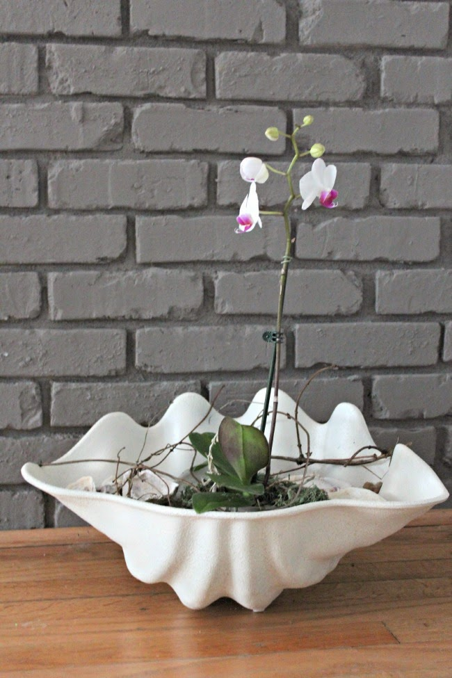 Creative Indoor Planter Ideas for Your Apartment - Turn a Giant Clam Shell into a Planter