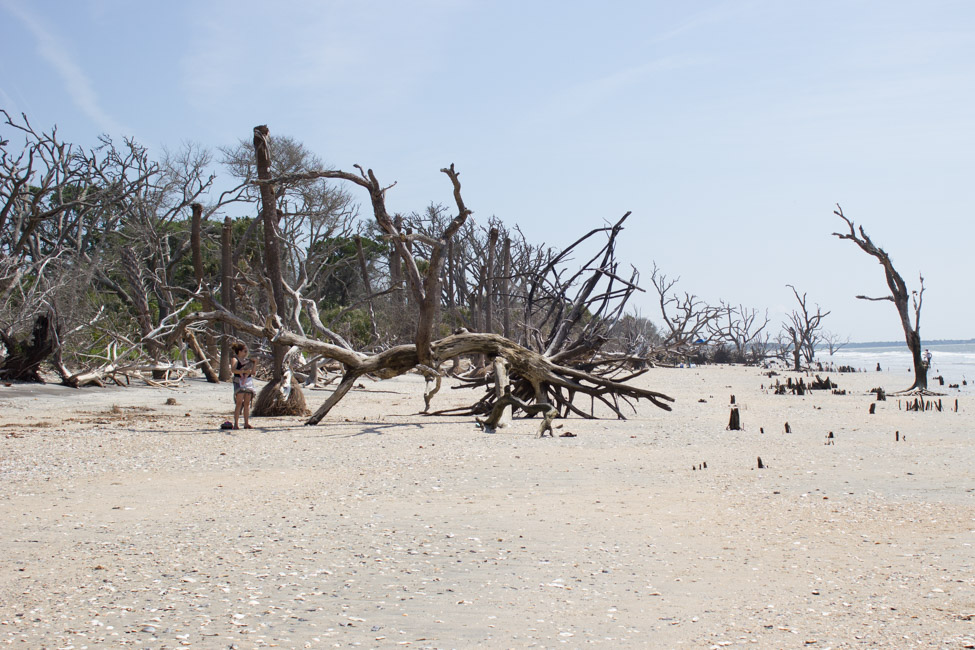 Botany Bay In Edisto Island Sc Is A Stunning Place To Visit Find Out