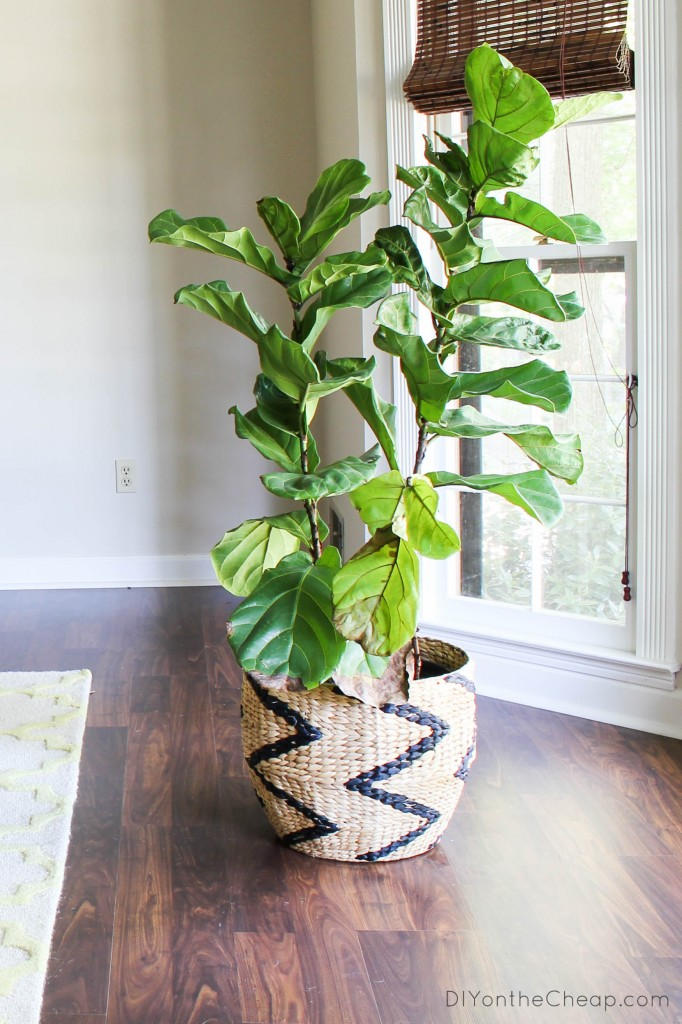 Attempting To Have A Green Thumb Recent Finds Erin Spain