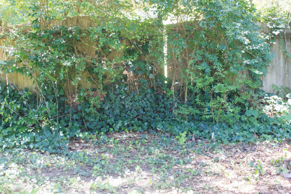 Check out the before and after of our ivy problem plus get some advice on how to deal with common neighbor issues!