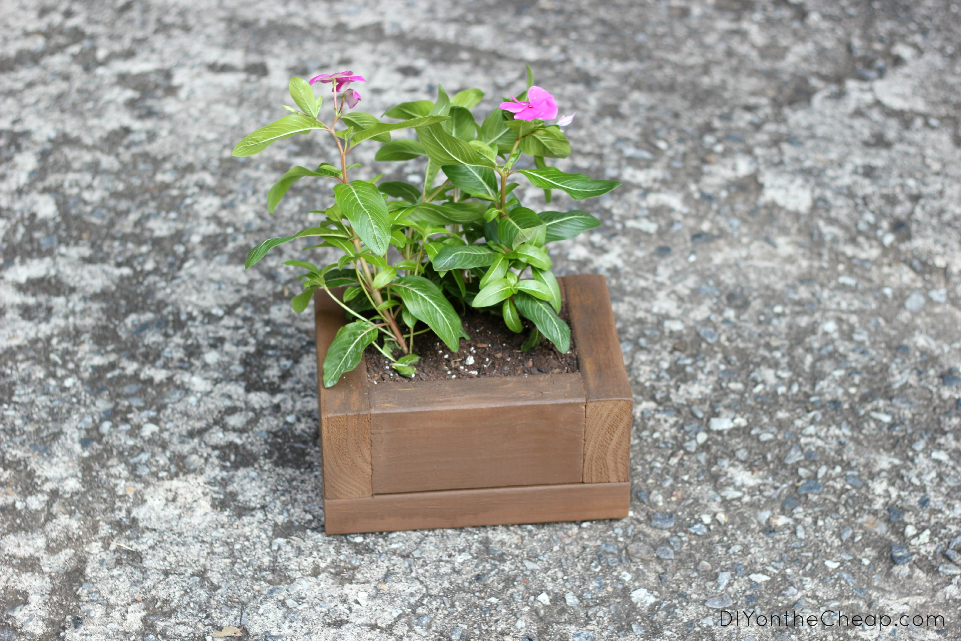 DIY Mini-Planter Tutorial