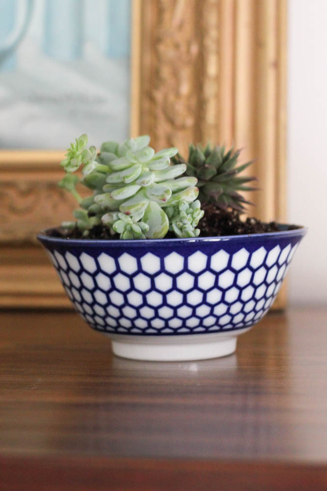 Creative Indoor Planter Ideas for Your Apartment - Repurpose a Pretty Bowl