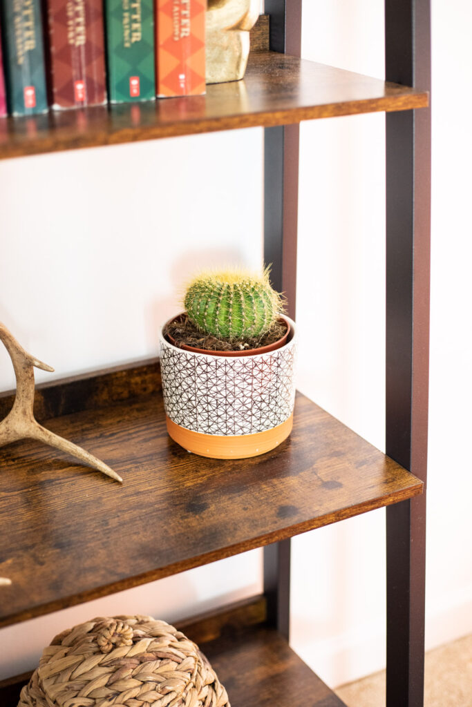 Cactus on a bookshelf.