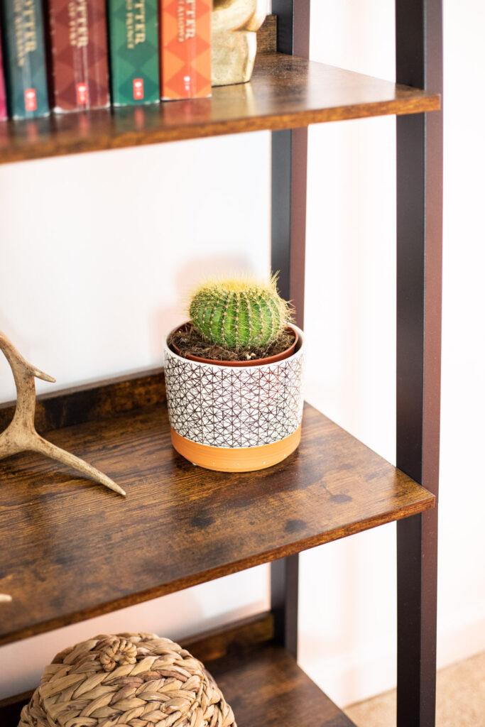 Cactus on a bookshelf.