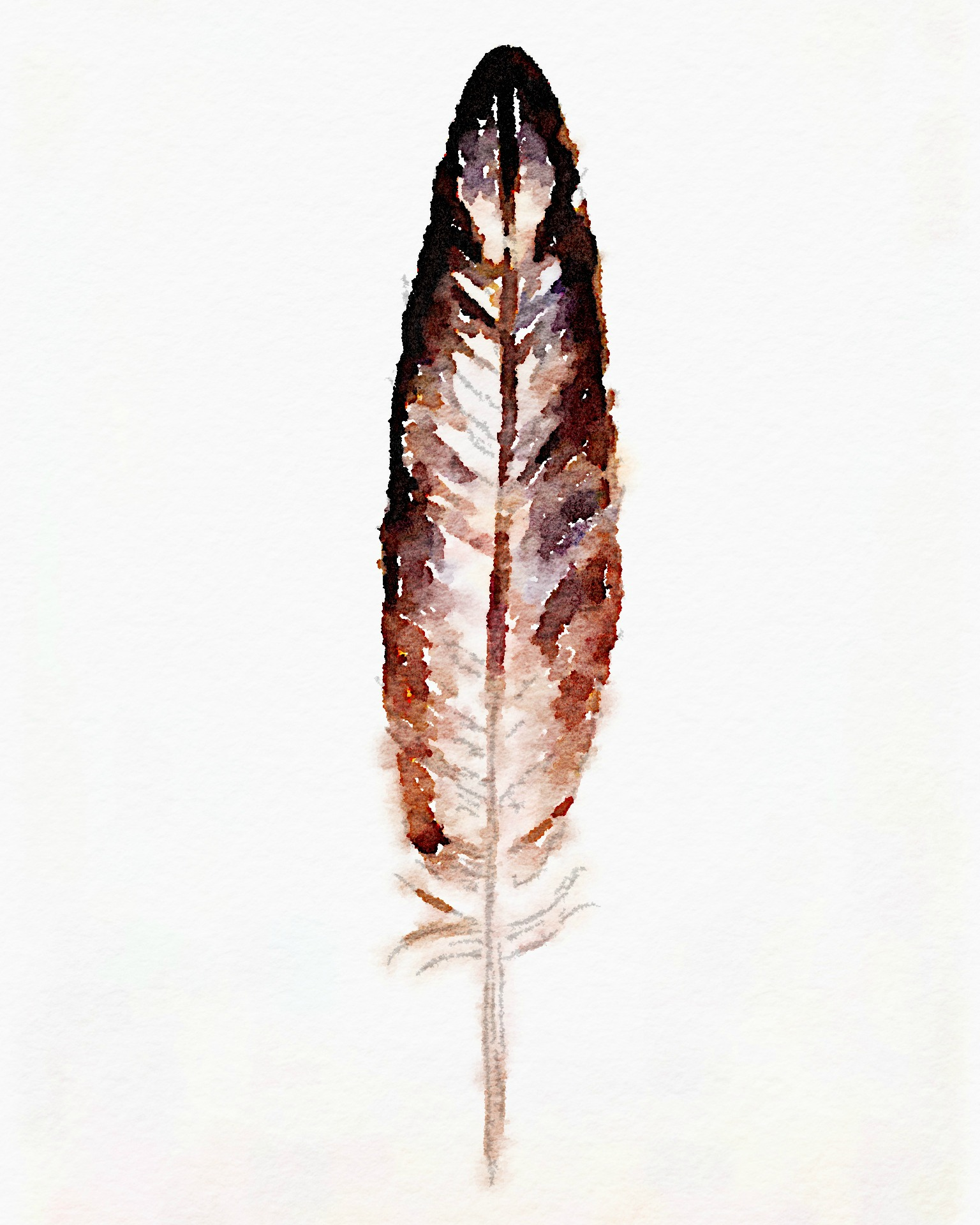 image about Feather Printable referred to as Watercolor Feather: Absolutely free Printable Artwork - Erin Spain